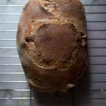 Enzo the Third Normandy Apple bread, 50% whole wheat batard, walnut-cranberry sourdough, olive sourdough bread first overview
