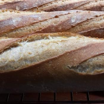Honey Bunny Baguette first overview